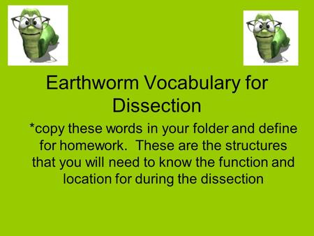 Earthworm Vocabulary for Dissection *copy these words in your folder and define for homework. These are the structures that you will need to know the function.