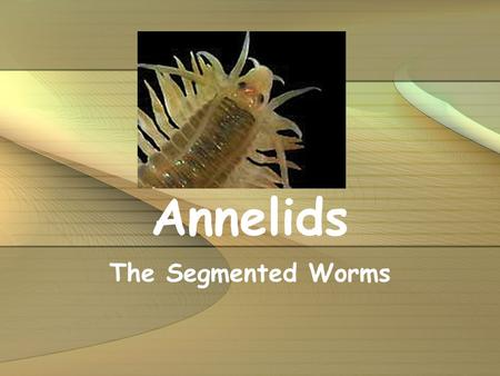 Annelids The Segmented Worms.