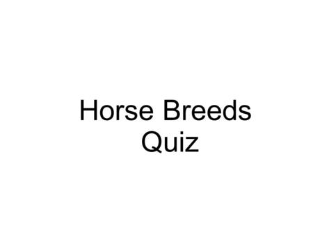 Horse Breeds Quiz. NOT A DRAFT 15 AND ½ HANDS Used for riding, driving, and high school routines. Foundation started in 1917. Found in circuses.