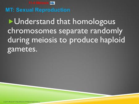 11-4 Meiosis  Understand that homologous chromosomes separate randomly during meiosis to produce haploid gametes. COPYRIGHT PEARSON PRENTICE HALL MT:
