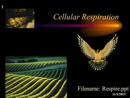 1 1 11/3/2015 Cellular Respiration Filename: Respire.ppt.