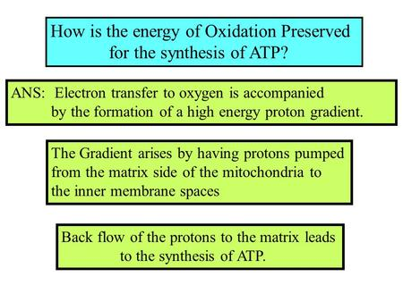 How is the energy of Oxidation Preserved for the synthesis of ATP? ANS: Electron transfer to oxygen is accompanied by the formation of a high energy proton.