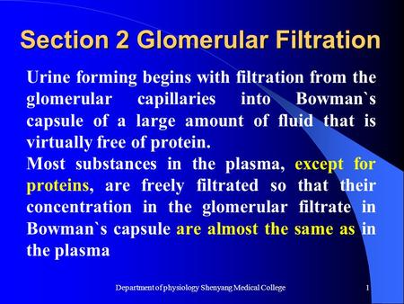 Department of physiology Shenyang Medical College1 Section 2 Glomerular Filtration Urine forming begins with filtration from the glomerular capillaries.