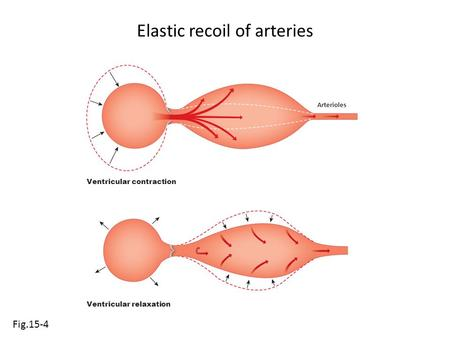 Elastic recoil of arteries Fig.15-4 Ventricular contraction Arterioles Ventricular relaxation.