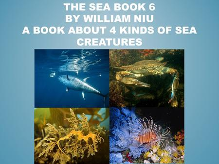 THE SEA BOOK 6 BY WILLIAM NIU A BOOK ABOUT 4 KINDS OF SEA CREATURES.