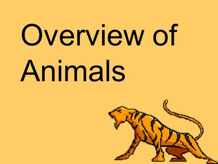 Overview of Animals. Animals are… Eukaryotes Multicellular Consumers.