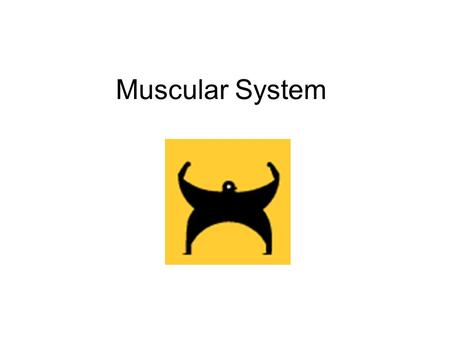 Muscular System. Types of Muscles Involuntary muscles are muscles not under your conscience control. They are responsible for such essential activities.