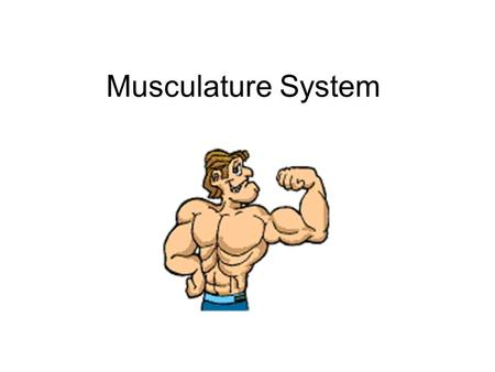 Musculature System. How Muscles and Bones Interact 1. Skeleton muscles generate force and produce movement only by contracting or pulling on body parts.