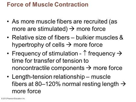 © 2013 Pearson Education, Inc. Force of Muscle Contraction As more muscle fibers are recruited (as more are stimulated)  more force Relative size of fibers.
