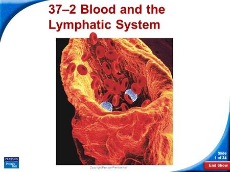 End Show Slide 1 of 34 Copyright Pearson Prentice Hall 37–2 Blood and the Lymphatic System.