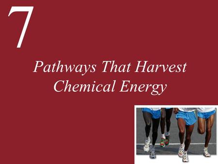 7 Pathways That Harvest Chemical Energy. 7 Pathways That Harvest Chemical Energy 7.1 How Does Glucose Oxidation Release Chemical Energy? 7.2 What Are.