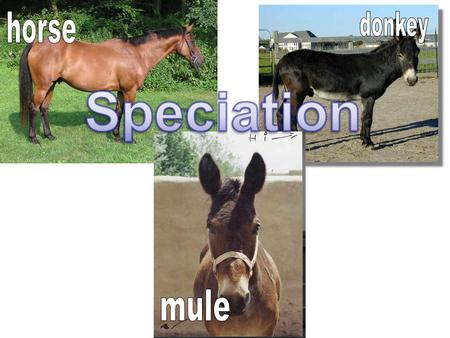 Speciation Defined: evolution of new species from an existing species Species: group of organisms that can interbreed and produce fertile offspring.