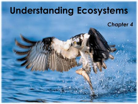 Understanding Ecosystems Chapter 4. Lesson 1 Vocabulary  Environment — all of the living and nonliving things that affect an organism.  Ecosystem —