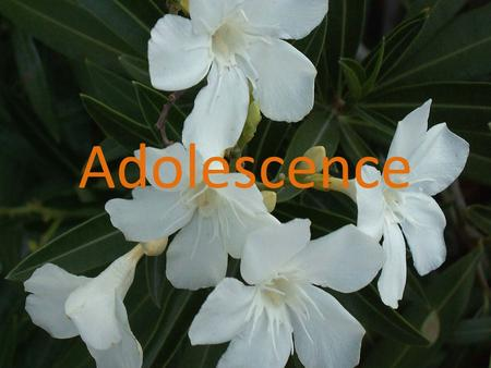 Adolescence. What is adolescence? The search of Identity. Physiological changes. The self esteem.