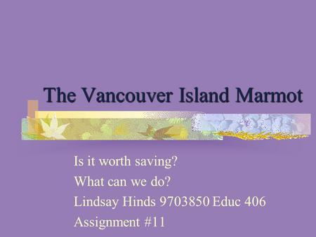 The Vancouver Island Marmot Is it worth saving? What can we do? Lindsay Hinds 9703850 Educ 406 Assignment #11.