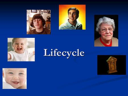 Lifecycle. Product lifecycle Development stage Lots of market research carried out Lots of market research carried out Research and development Research.
