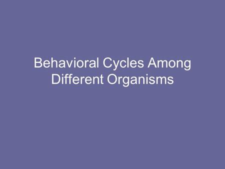 Behavioral Cycles Among Different Organisms. Behavioral Cycles in Plants Plant Dormancy –Is a temporary state of reduced rate or no internal activity.