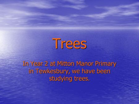 Trees In Year 2 at Mitton Manor Primary in Tewkesbury, we have been studying trees.