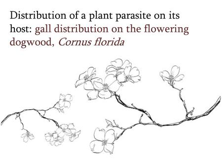 Distribution of a plant parasite on its host: gall distribution on the flowering dogwood, Cornus florida.