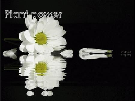 This power point will teach you about flowers, plants and how they live.