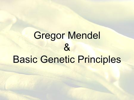 Gregor Mendel & Basic Genetic Principles. Who is Gregor Mendel? Austrian Monk that experimented with pea plants. He discovered the basic principles of.