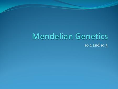 10.2 and 10.3. The Father of Genetics Gregor Mendel- Austrian Monk and Plant breeder Used pea plants to study how traits were inherited(heredity) Mendel.
