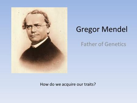 mendelian genetics essays The foundation of genetics lies with the principles that gregor mendel outlined after his experiments with pea plants where he discovered the relationship between physical characteristics, or phenotype, and genetic traits, or genotype.