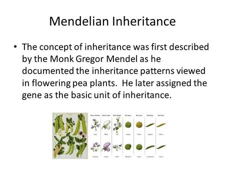 Mendelian Inheritance The concept of inheritance was first described by the Monk Gregor Mendel as he documented the inheritance patterns viewed in flowering.