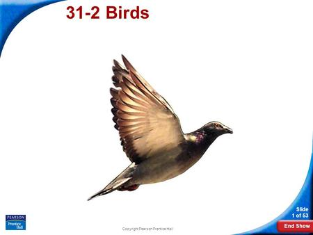 End Show Slide 1 of 53 Copyright Pearson Prentice Hall 31-2 Birds.