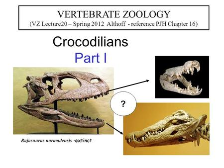 Crocodilians Part I VERTEBRATE ZOOLOGY (VZ Lecture20 – Spring 2012 Althoff - reference PJH Chapter 16) Rajasaurus narmadensis - extinct ?
