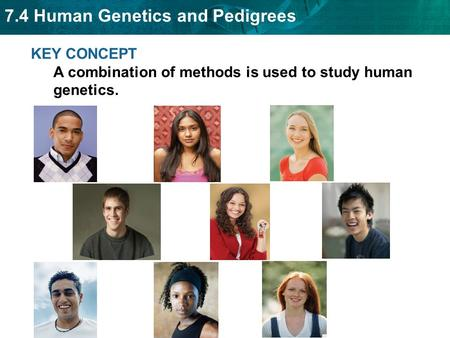 7.4 Human Genetics and Pedigrees KEY CONCEPT A combination of methods is used to study human genetics.