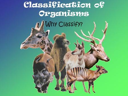Classification of Organisms Why Classify?. The scientific name of an organism gives biologists a common way of communicating, regardless of their native.