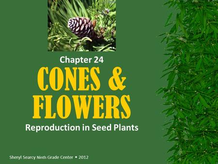 Sheryl Searcy Ninth Grade Center  2012 CONES & FLOWERS Reproduction in Seed Plants Chapter 24.