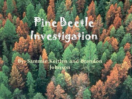 By: Sammie Keitlen and Brandon Johnson. 1 year life cycle Late Summer: Adults leave dead trees -Seek out new trees -Beetles mate -Form a tunnel under.
