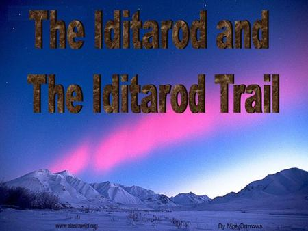 By Mrs. Burrows. What is the Iditarod? The Iditarod is a dog sled race that takes place in Alaska, U.S.A. every year.