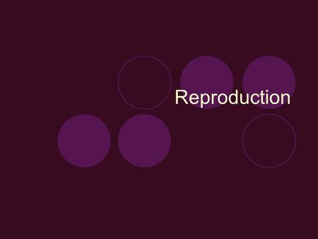 Reproduction. Reproductive Terminology Castration  Removing the testicles of male animals to prevent breeding Colostrum  The first milk produced after.