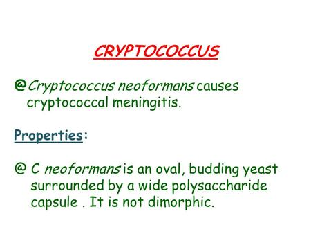 neoformans causes cryptococcal meningitis. C neoformans is an oval, budding yeast surrounded by a wide polysaccharide.