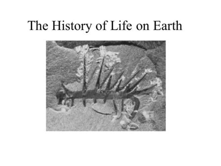 The History of Life on Earth. History of Life Originated 3.5-4.0 billion years ago Fossil evidence: stromatolites.
