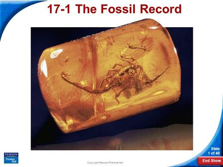 End Show Slide 1 of 40 Copyright Pearson Prentice Hall 17-1 The Fossil Record.