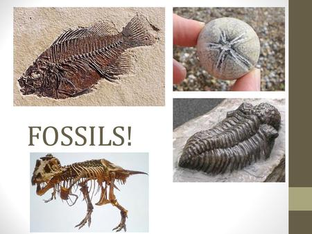 FOSSILS!. What is a Fossil? A fossil is any evidence of prehistoric life. Must be older than 10,000 years but can be up to billions of years old. Can.