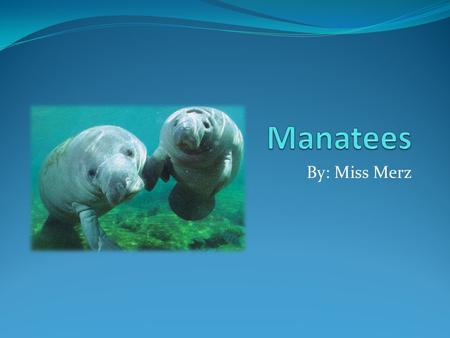 By: Miss Merz. What is a Manatee? A manatee is a mammal.