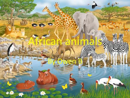 African animals By Owen B. Cheetah There is not an faster animal than a cheetah. The cheetah can run up to 110 kilometres per hour. The cheetah likes.