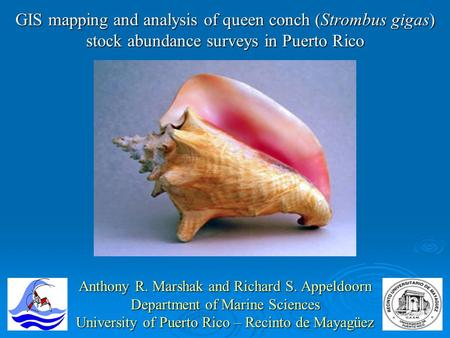 GIS mapping and analysis of queen conch (Strombus gigas) stock abundance surveys in Puerto Rico Anthony R. Marshak and Richard S. Appeldoorn Department.