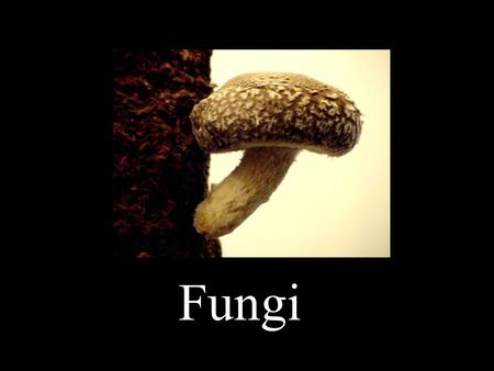 Fungi. Basic Information: Fungi are... - eukaryotes - mostly multicellular - sometimes unicellular (yeast) - very diverse with an estimated 1.5 million.