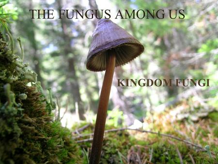 "THE FUNGUS AMONG US KINGDOM FUNGI. More than just Mushrooms… Mushrooms –Club: Typical shape of ""mushroom,"" with spores on gills."