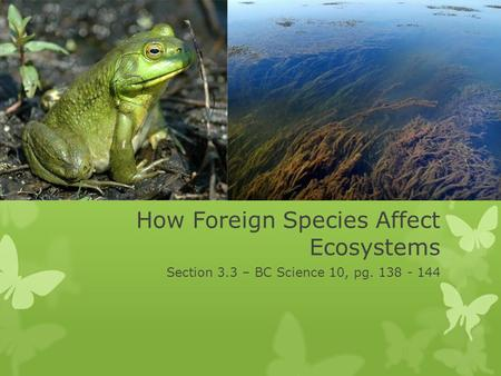 How Foreign Species Affect Ecosystems