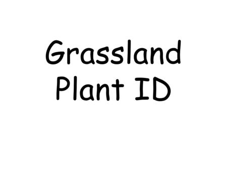 Grassland Plant ID. Grasses & Grass-like Barley, Little.
