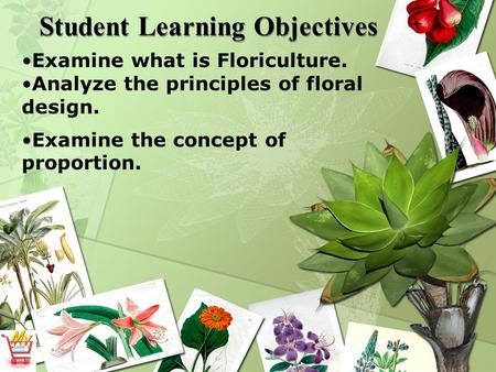 Student Learning Objectives Examine what is Floriculture. Analyze the principles of floral design. Examine the concept of proportion.