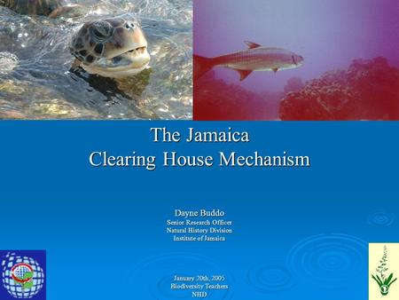 The Jamaica Clearing House Mechanism Dayne Buddo Senior Research Officer Natural History Division Institute of Jamaica January 20th, 2005 Biodiversity.