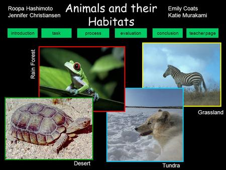 introductiontaskprocessevaluationconclusionteacher page Animals and their Habitats Grassland Tundra Desert R a i n F o r e s t Roopa Hashimoto Jennifer.